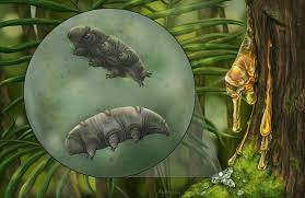 16 million years old Tardigrade fossil has been discovered recently!